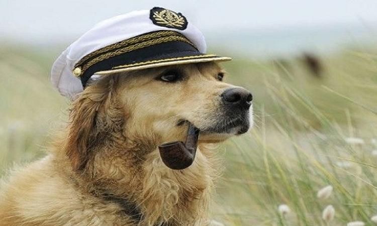 بالصور .. مطار أمريكى للحيوانات فقط .. لأ كده كتييييييييييييير !!