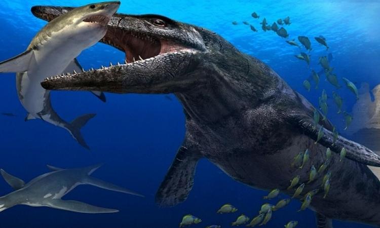 اكتشاف ديناصور بحرى نادر فى اسكتلندا عاش قبل 150 مليون سنة