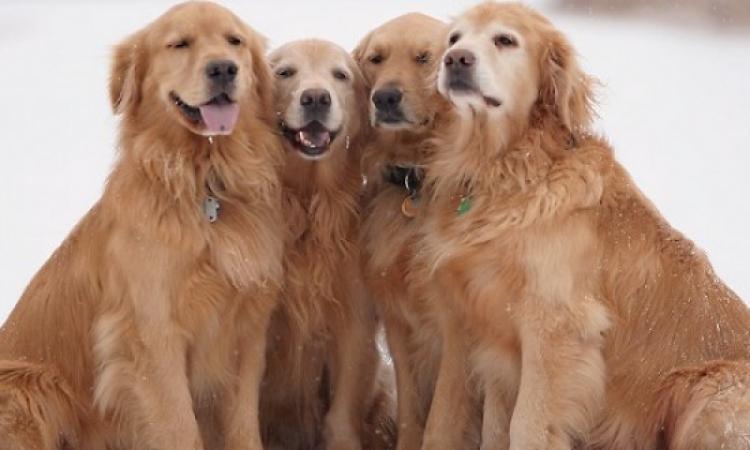 أكثر من 24 مليون مشاهدة لطفلة عمرها 4 سنوات تطعم 6 كلاب .. لا بس سيطرة !!