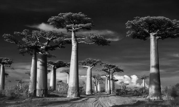 بالصور .. مصورة تُظهر جمال و روعة الاشجار المتقدمة فى العمر