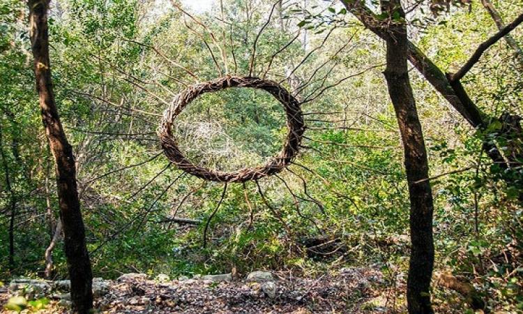 بالصور .. الابداع لا حدود له .. خلق لوحة فنية من أغصان الشجر