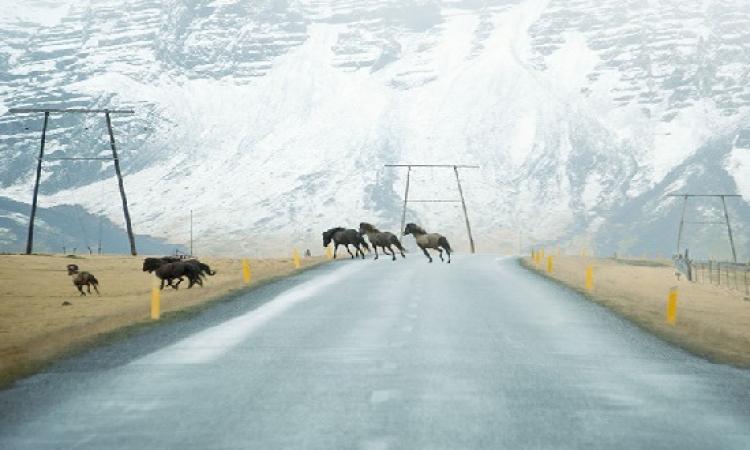 بالصور .. جمال الطريق بعيون الشتاء