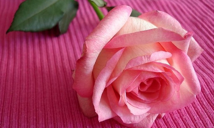 صباح الورد.. خبيرة الاتيكيت تحدثنا عن الأفضل فى هدايا عيد الأم