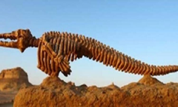 أكتشاف نوع جديد من الاكتيوصورمخزن بمتحف بريطانيا منذ 30 عام..ولسه فكرينه دلوقتى