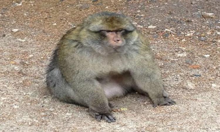 زوجان يقرران ترك كل ثروتهم لقرد بعد موتهم …غريبة دى خلاص البشر خلصوا
