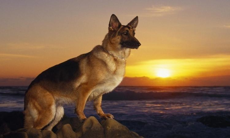 بالصور.. دلع كلبك بنظارة شمس وتيشيرت وأسورة ليزر