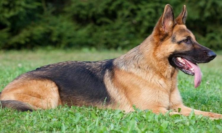 النيابة تأمر بحبس 3 أشخاص 4 أيام على ذمة التحقيقات لاتهامهم بقتل كلب