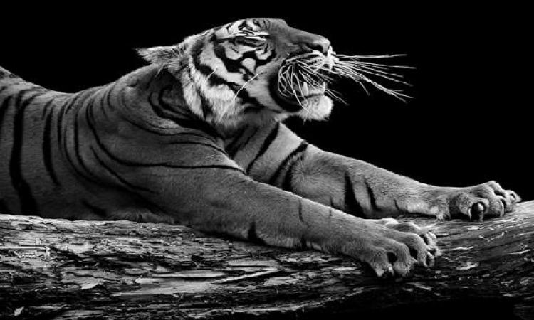 بالصور .. جلسة تصوير للحيوانات فقط