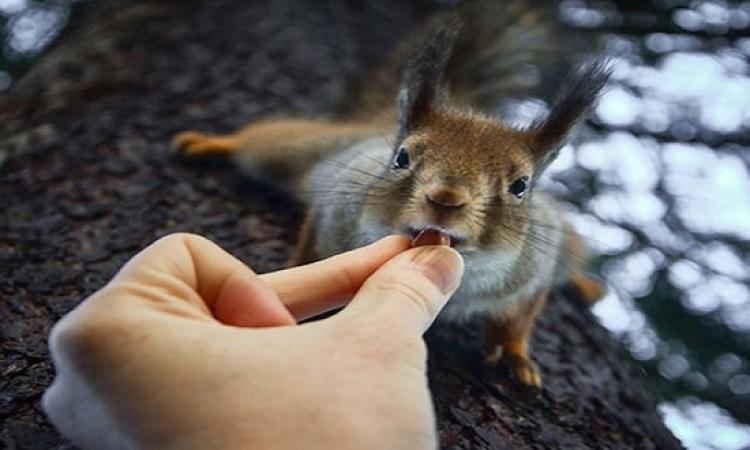 بالصور .. حيوانات تأكل من يد مصورها