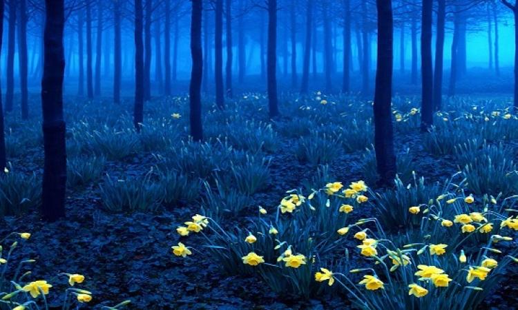 بالصور .. شاهد أجمل وأروع المناظر الطبيعية للغابات البرية حول العالم