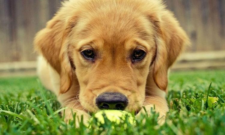 ناشطة فى حقوق الحيوان تطالب بتطبيق قانون الإرهاب ضد مرتكبى واقعة ذبح كلب الأهرام