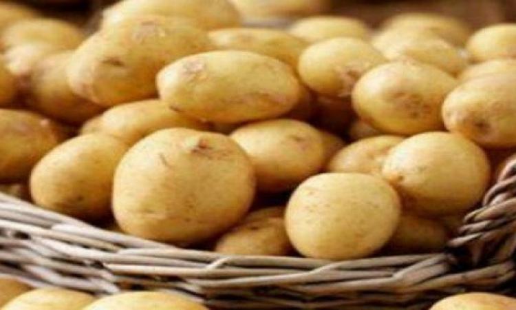 روسيا ترفض استيراد البطاطس من مصر بسبب العفن البكتيرى.. هى وصلت للدرجة دى
