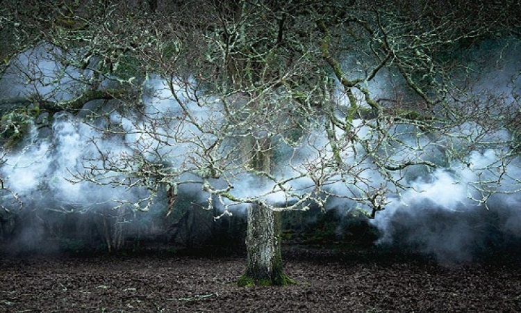 شاهد غابات بريطانيا الساحرة .. بلمسة فنان عاشق للطبيعة