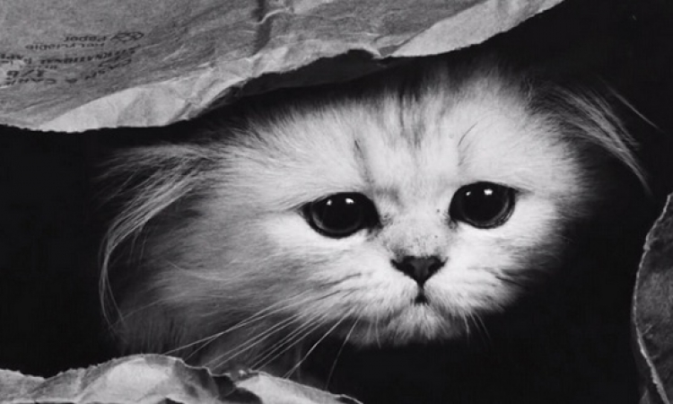 بالصور.. يوم فى حياة القط جورج اللى فاكر نفسة إنسان!!