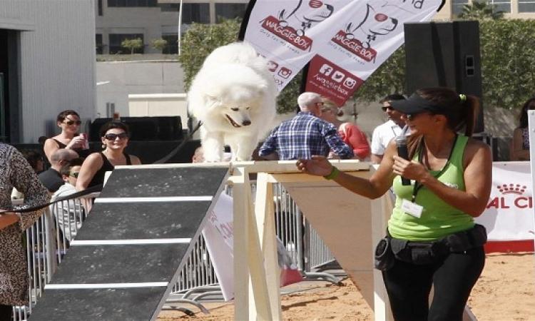 بالصور…دورة الألعاب الأولمبية للكلاب والحيوانات الأليفة