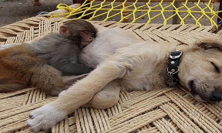 بالصور.. الحيوانات لما تنام مع بعضها .. غطيهم أحسن يبردوا !!