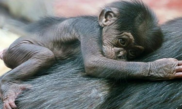 دعوة لمنح الحيوانات نفس الحقوق القانونية الخاصة بالإنسان