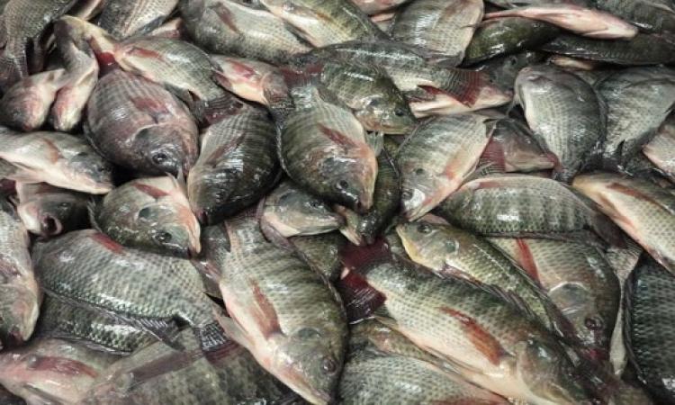 الزراعة : الفوسفات لم يؤثر على اسماك النيل .. اكيد بقى السمك هو اللى اثر على الفوسفات !!