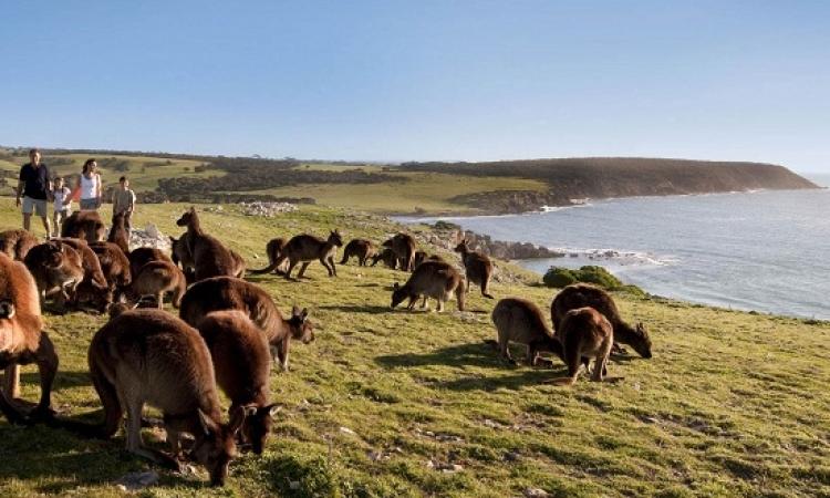 جولة ممتعة فى جزيرة الكنغر بأستراليا