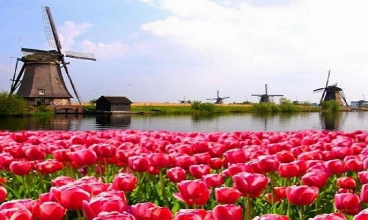 هولندا سحر وجمال وطبيعة .. لرحلة ربيعية