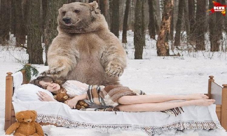 بالصور .. جلسة تصوير لعارضات أزياء مع دب  وزنه 700 كيلوجرام
