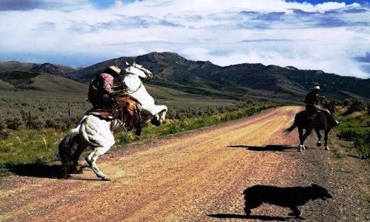 جولة فى غرب أمريكا.. حيث موطن الـcowboy
