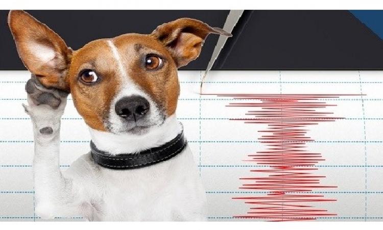 دراسة تؤكد معرفة الحيوانات بالزلازل قبل حدوثها .. سبحان الله