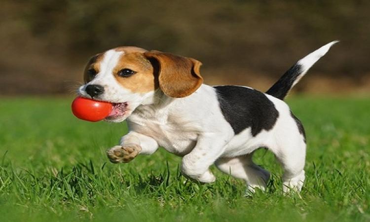 بالفيديو.. كلب تايوانى ذكى بيعرف يحسب .. ممكن يشتغل مدرس خصوصى لولادك!!