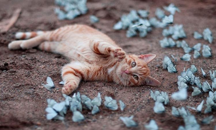 صور طريفة للعب الفراشات مع الحيوانات .. الفراشات لما تلزق !!