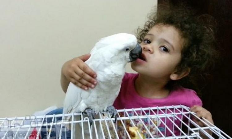 بالفيديو .. ببغاء مدهش يخلع لطفل ضرسه .. ولا اجدع دكتور اسنان !!