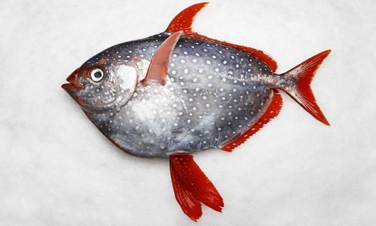 """""""أوباه"""" .. سمكة تعيش فى الاعماق بس زى البنى آدمين .. إزاى يعنى؟!!"""