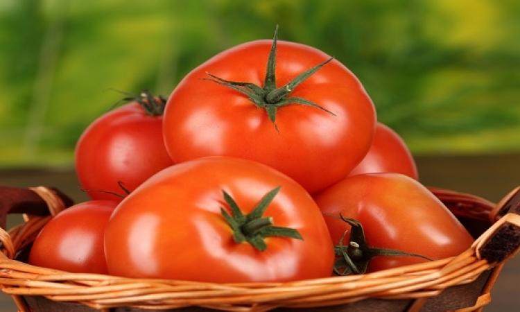 رئيس حماية المستهلك: الطماطم فى السوق بـ10 جنيهات .. مالها الصلصة