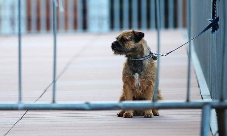 جهاز لمراقبة تصرفات الكلاب