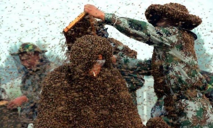 صينى تلدغه 2000 نحلة .. ويدخن سيجارته بكل هدوء