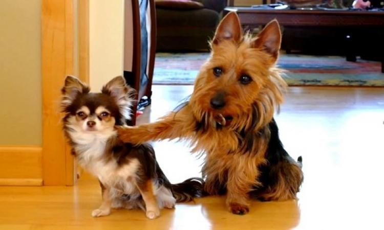 بالفيديو.. حتى الكلاب لما بتتخنق بتخون!!