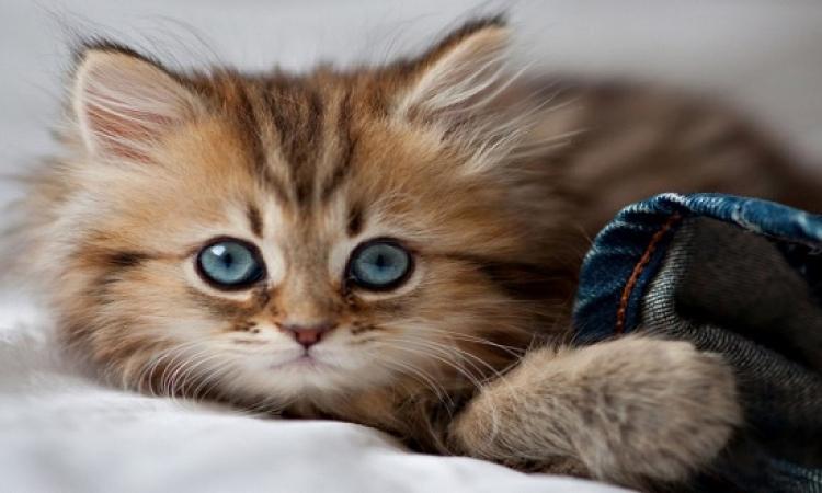 بالصور.. ما سر اندهاش هذا القط دائما؟!!