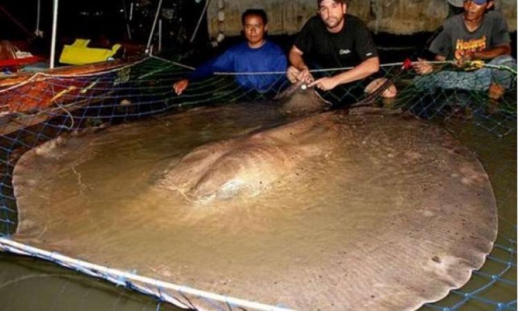 الحيوانات الأكبر فى العالم .. متصدمش من حجمها وشوف الصور
