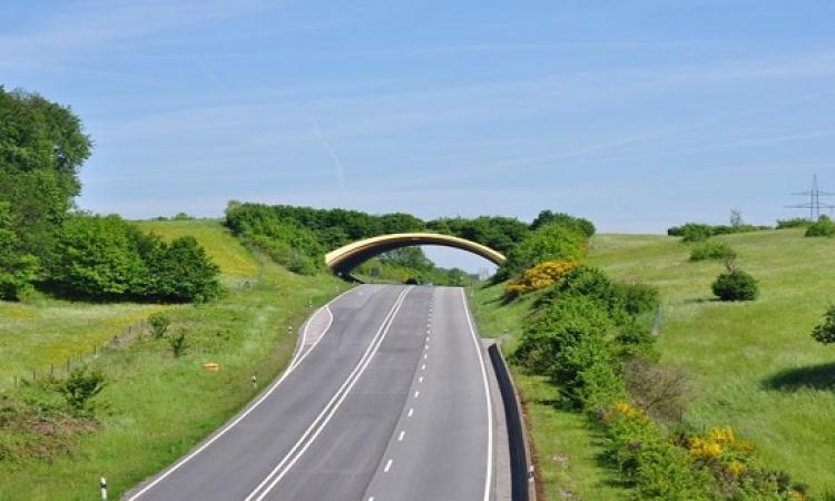 بالصور .. جسور للطبيعة وليست للبشر