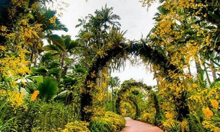 جولة فى حديقة سنغافورة النباتية