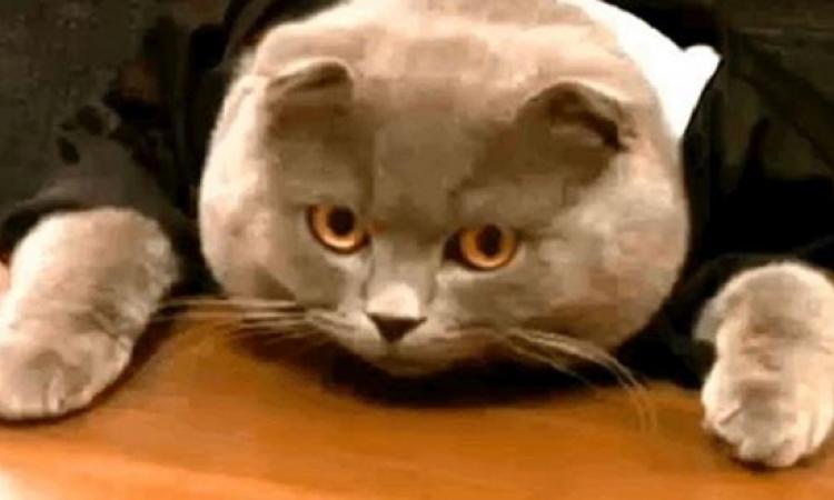 القطة بوس مديرة الاتصالات براتب 200 يورو .. هى القطط بتاخد راتب كمان