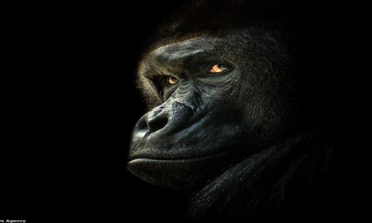 كيف ستبدو الحيوانات لو كانت فى الظلام؟