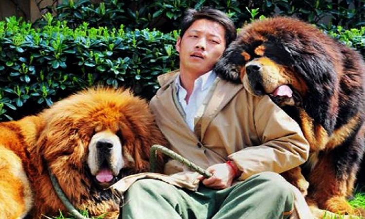 هذا هو سعر اغلى كلب فى العالم.. والمشترى صينى