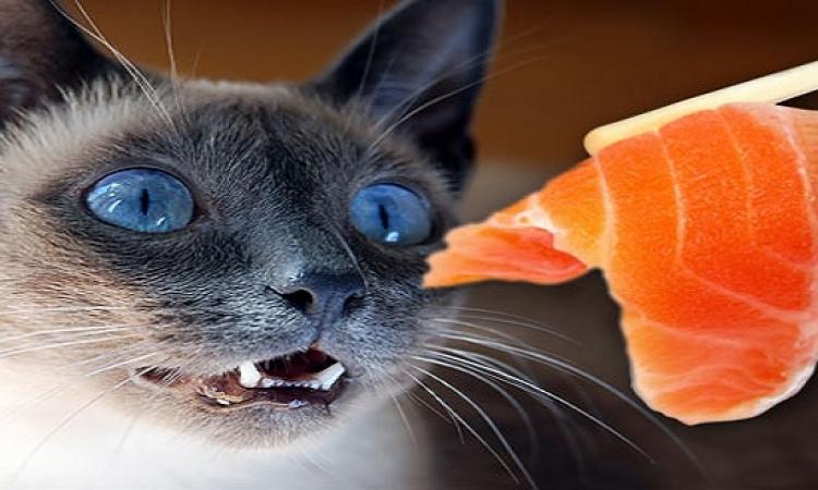 قطة تكشف عن سم داخل وجبة سمك كان من نصيب أحد أفراد الشرطة !!