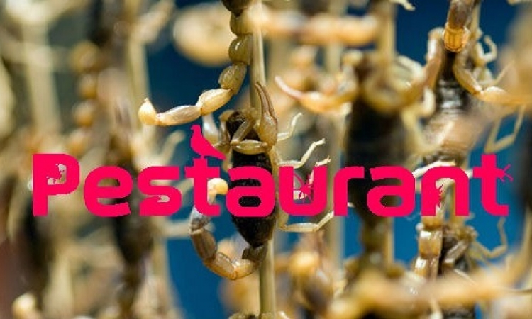 افتتاح مطعم يقدم أطباق صراصير وجراد فى بريطانيا .. نفسهم حلوة بزيادة !!