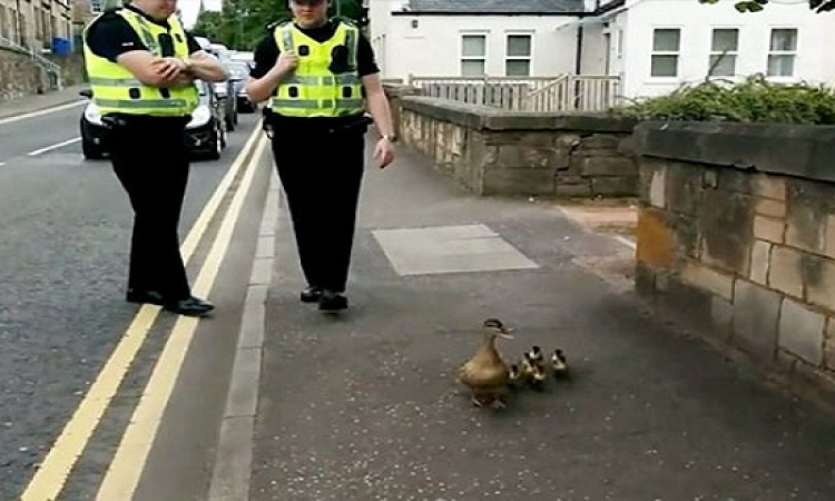 بالفيديو.. الشرطة فى خدمة البط فى اسكتلندا