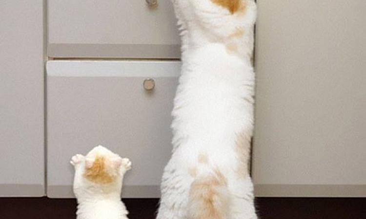 الامومة لا توصف لقطات طريفة تُظهر القطط الأم مع صغارها