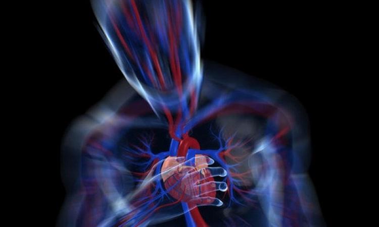 ماذا يحدث قبل موت الأنسان هل يتوقف القلب أولا أم الدماغ !!