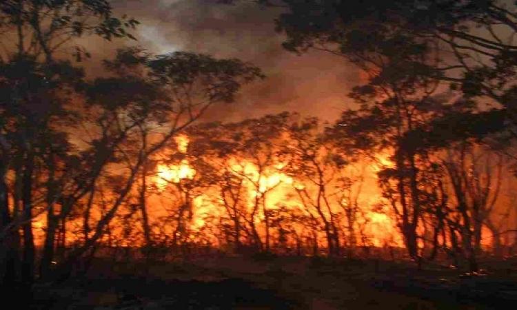 إسبانيا تحاول السيطرة على حريق الغابات ب 16 طائرة إطفائية