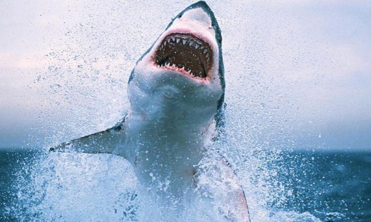بالفيديو .. شاهد كيف نجا غواص من هجوم سمكة قرش ؟