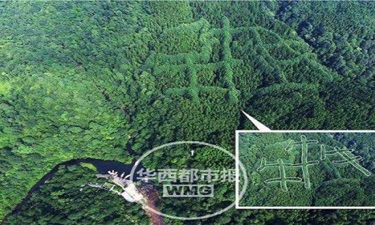 بالصور.. لغز ظهور كتابات صينية على نباتات جبلية فى سيتشوان